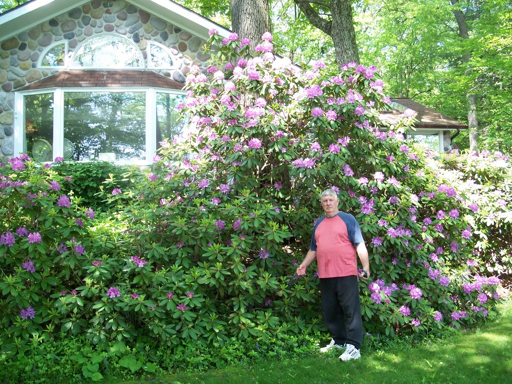 6 ft. Ret. Arborist, Evan Rice, Shows Record-Breaking Rhododendrons Over 20 Ft High